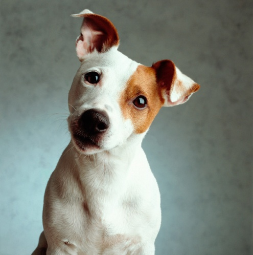 cute dog.jpg