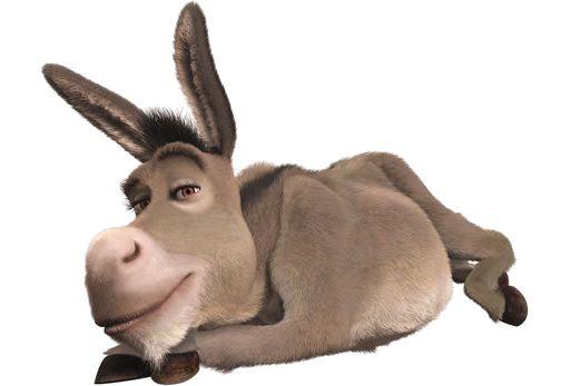 donkey_01.jpg